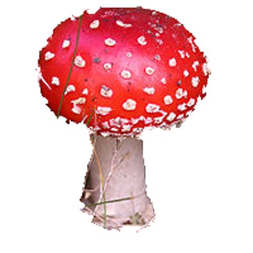 Mushrooms For Everyone