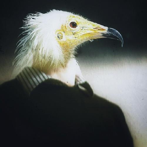 Best of dangerousbirds