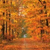 Dance of the falling leaves (VideoLink, free Download)