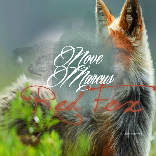 Red Fox by Nove Marcus