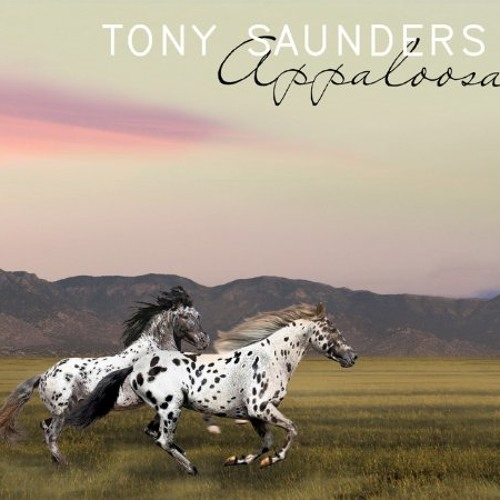 Tony Saunders : Appaloosa