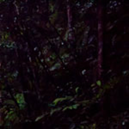 Pasoh Forest Reserve, Malaysia - Frogs and Insects after Dusk