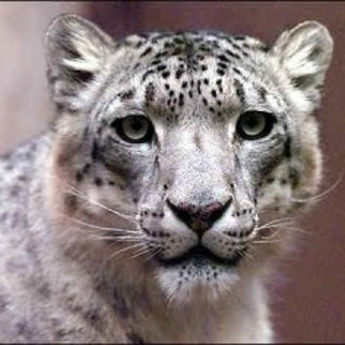 TRAVISWILD's Animal Kingdom Radio 012 - Snow Leopard