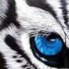 Eye Of The Tiger Mixtape (2K14 Promo Mixtape)