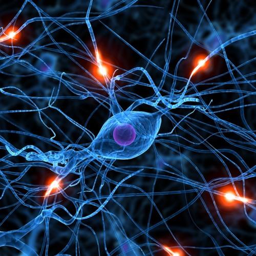 Orko - Neuroscience (preview)