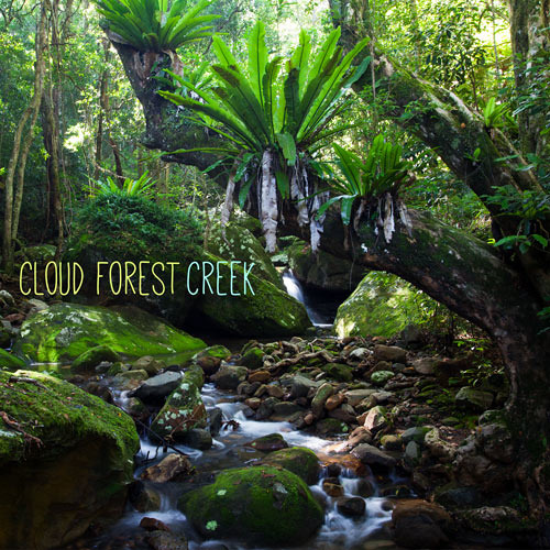 "Album ""Cloud Forest Creek"" - 48 minute Recording from Mt Hypipamee NP, QLD, Australia"