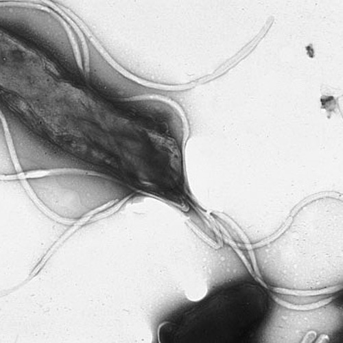 Helicobacter Pylori - December 2011