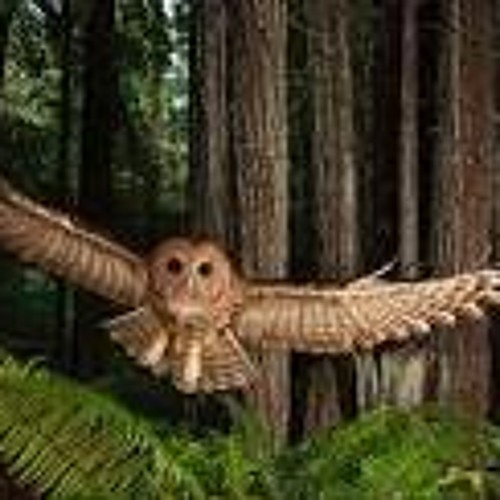 Logging companies say new proposed spotted owl rules are worse than redundant