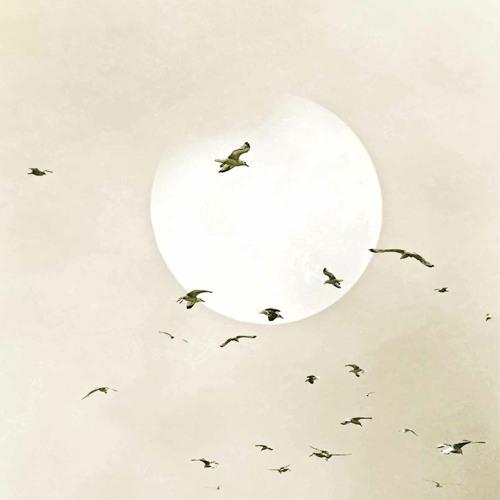 Snowbird x RxGibbs - I Heard The Owl Call My Name