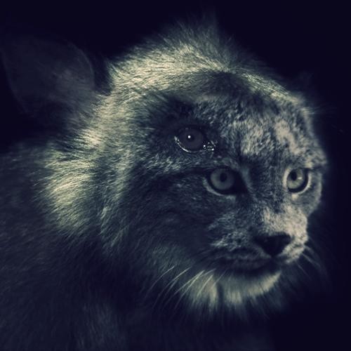 124-cavecat