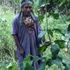Ayahuasca Icaro by shaman Artidoro