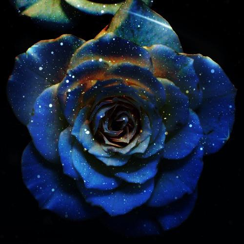 Half The Flowerpress Volume 7 (intergalactic cosmic space-flower edition)
