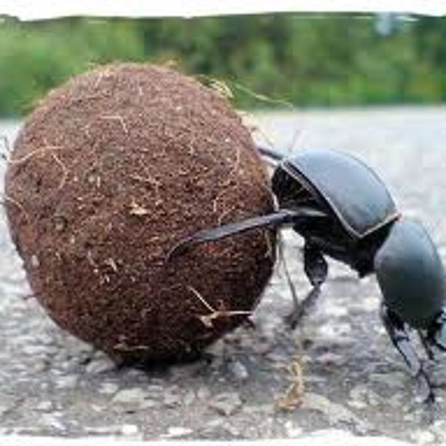 Ballad of a Dung Beetle