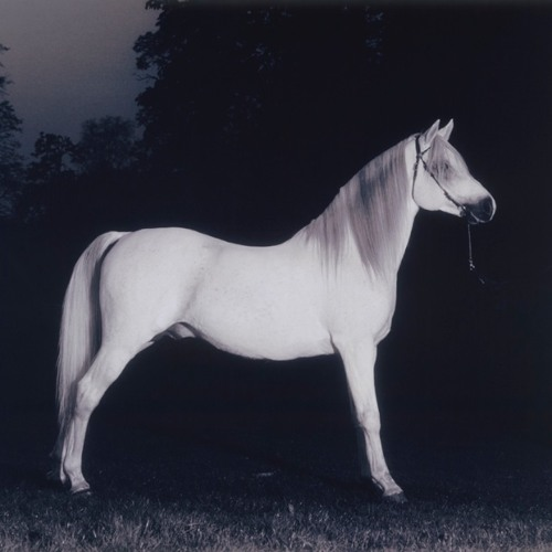 Year Of The Horse (Updated: final mix from the album 'A Floating Life')