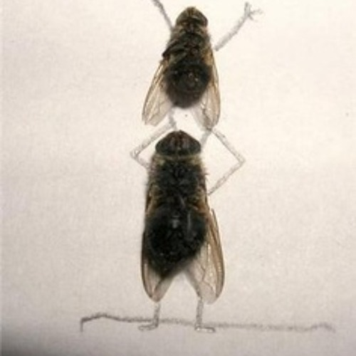 Talking Wallflies Choose Not To Fly