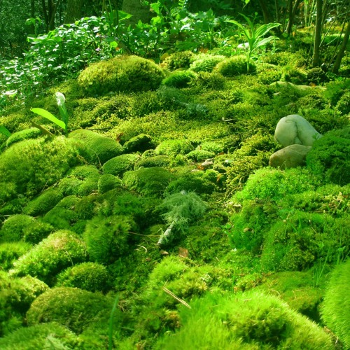 Moss (no. 1)