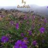 Wildflower Running