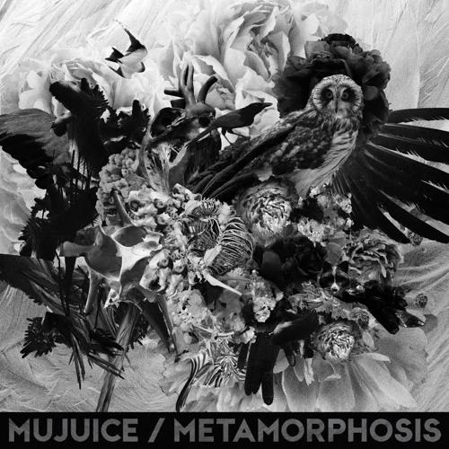Owl Path / Metamorphosis (2014)