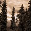 Walking Through The Winterland