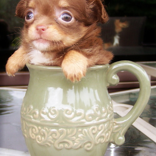 Accidents, Puppies, And Coffee