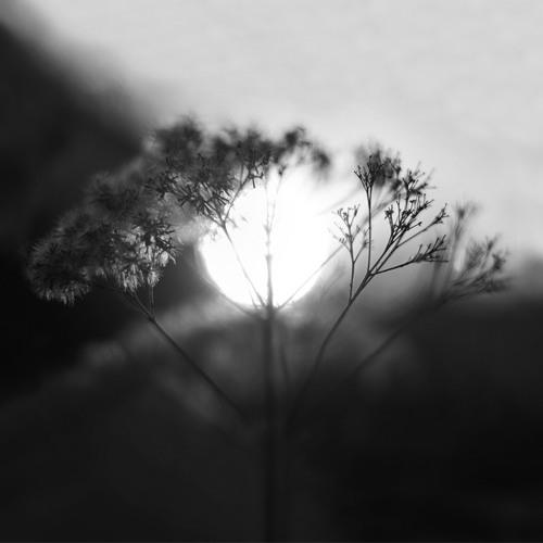 Sunrise Lullaby (Track 2: Dream Orbiter Ep)