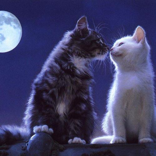 Картинки котов влюбленных с надписями