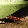 الشيخ محمد أيوب -- النمل   قراءة حجازية  قديمة mp3