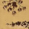 Sukiyaki (Cover Ue o muite arukou by Kyu Sakamoto)