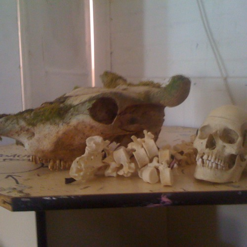 Experiment with Double Skinned Intonarumori, Human Skull and Spine and Bull's Horns