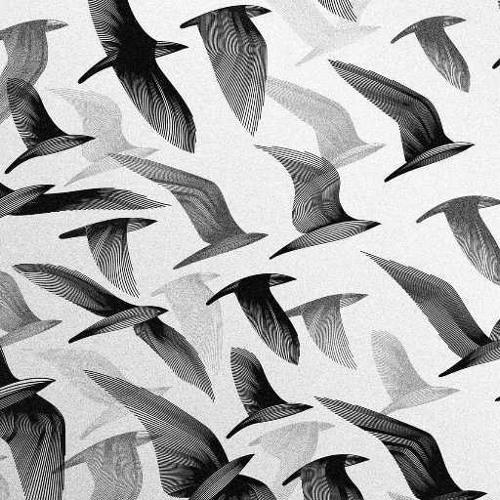 sand birds