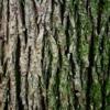 El árbol / Atahualpa Yupanqui