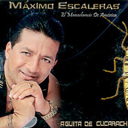 CD 28 - AGUITA DE CUCARACHA