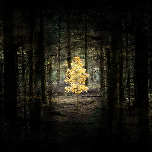 forest of mirrors : episode II