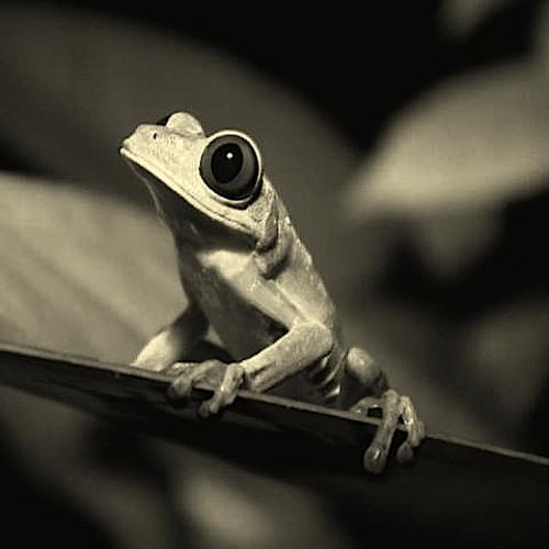 TKP - Rainforest