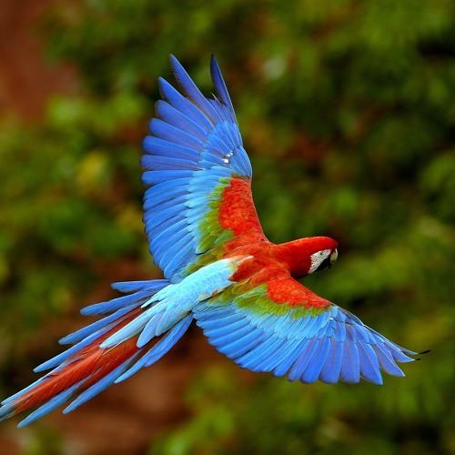 The Bird Watching Foxtrot Shimmy