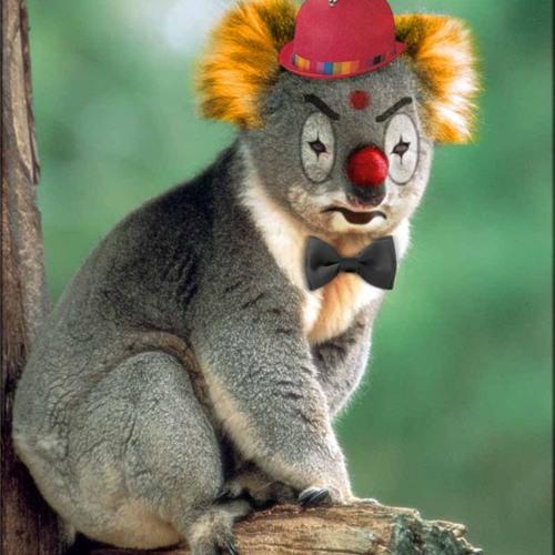 Clown Koala
