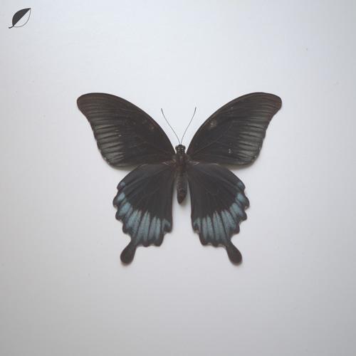 Christian Löffler – Notes (Monokle Remix)