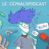 #10 - Le céphalopodcast