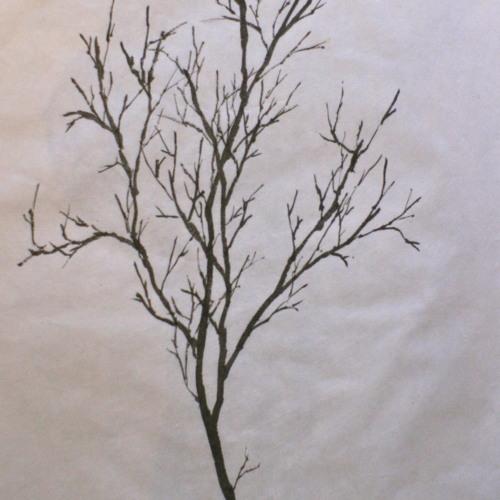 Bstep - Trees