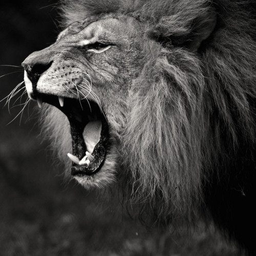 Lion (London Fashion Week 2014 Instrumental Mix)