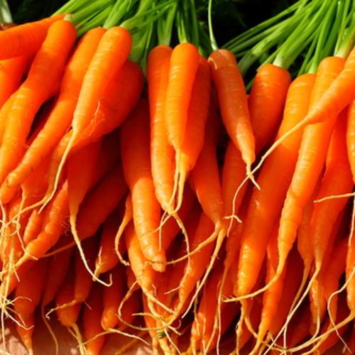 Carrot's Volca