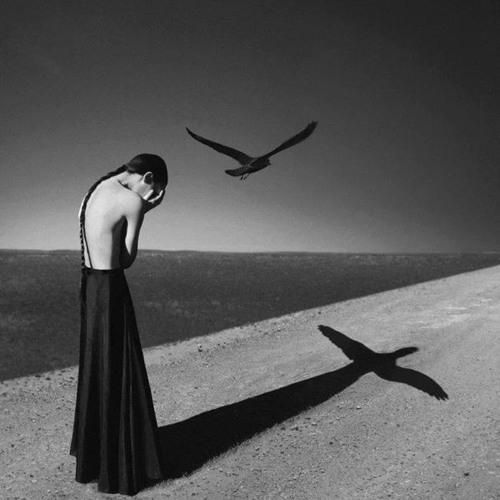 Crows (For Milo Selchaif)
