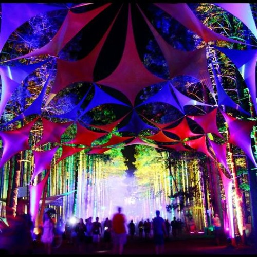 Electric Forest 14