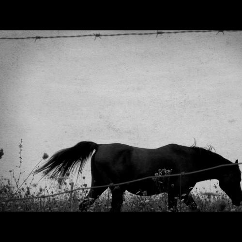 The Be Good Tanyas - Horses (Beat Syndrome Remix)