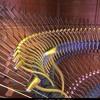 Acoustic Curves  ( Remix )