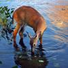 As the Deer - Instrumental (New Guitar Demo)