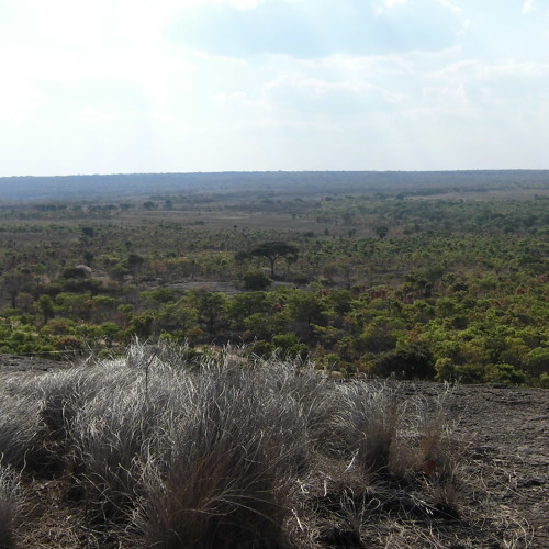 Recordings from Zambia 07: Late afternoon bushfire