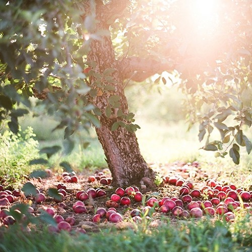 THE ORCHARD - by Amy Spillert © 2012