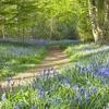 Spring Time riddim by Country Hi-fi