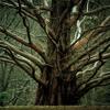 Stand High Patrol + Bad Company - The Nine Big Tree (Lazlow Bootleg)